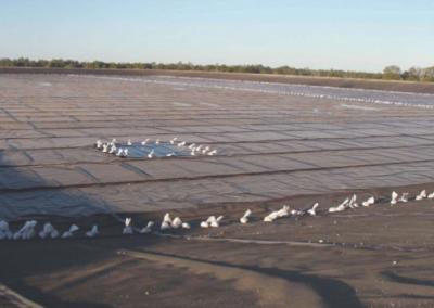 Condamine - Coal Seam Gas Project
